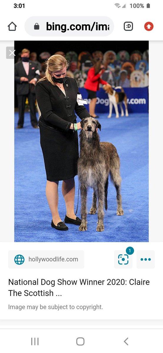 @GoldDerby Highest dog show in USA Ny winner is #ScottishWolfhound named #ClaireRandallFraser for real !!  #bestinshow