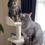 猫の上下関係は厳しい?「許可なく見上げるな、不愉快だ」