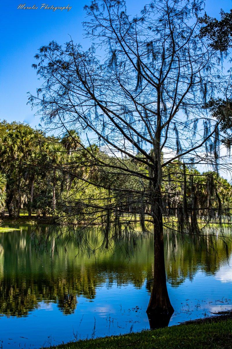 The lonely tree...  https://t.co/cC2wTS27Bq #photography #fotografiadepaisaje #fotografia #paisaje #landscape #landscapephotography #nature #naturephotography #florida #trips #travels #viajes #exploreFL #discover https://t.co/qqTo7jdrPf