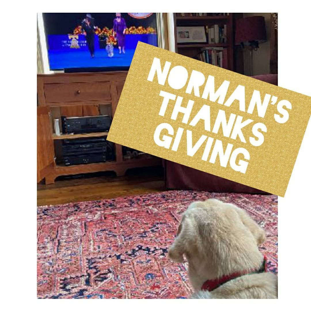 How did you spend your day? #thanksgiving #dogshow #bestinshow #maryruthbooks