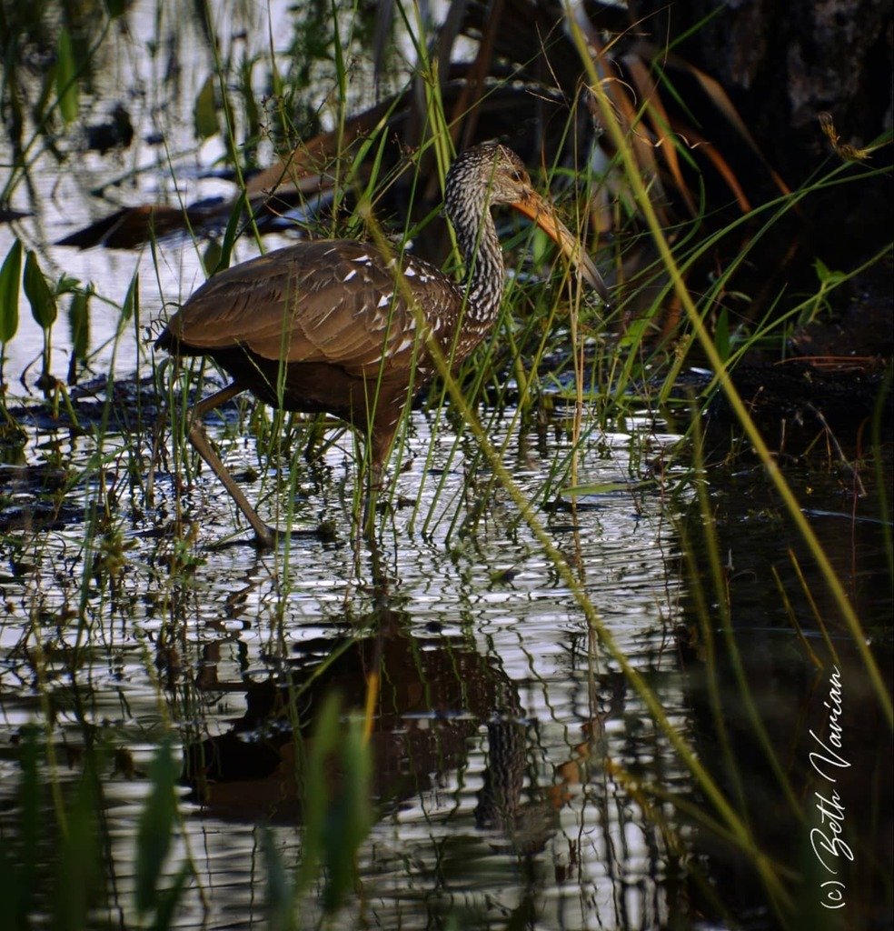 #floridalife #florida #outdoorphotography #naturephotography  #naturelife #wildlifephotography #wildlifephotos https://t.co/VzfzOH0Qi0