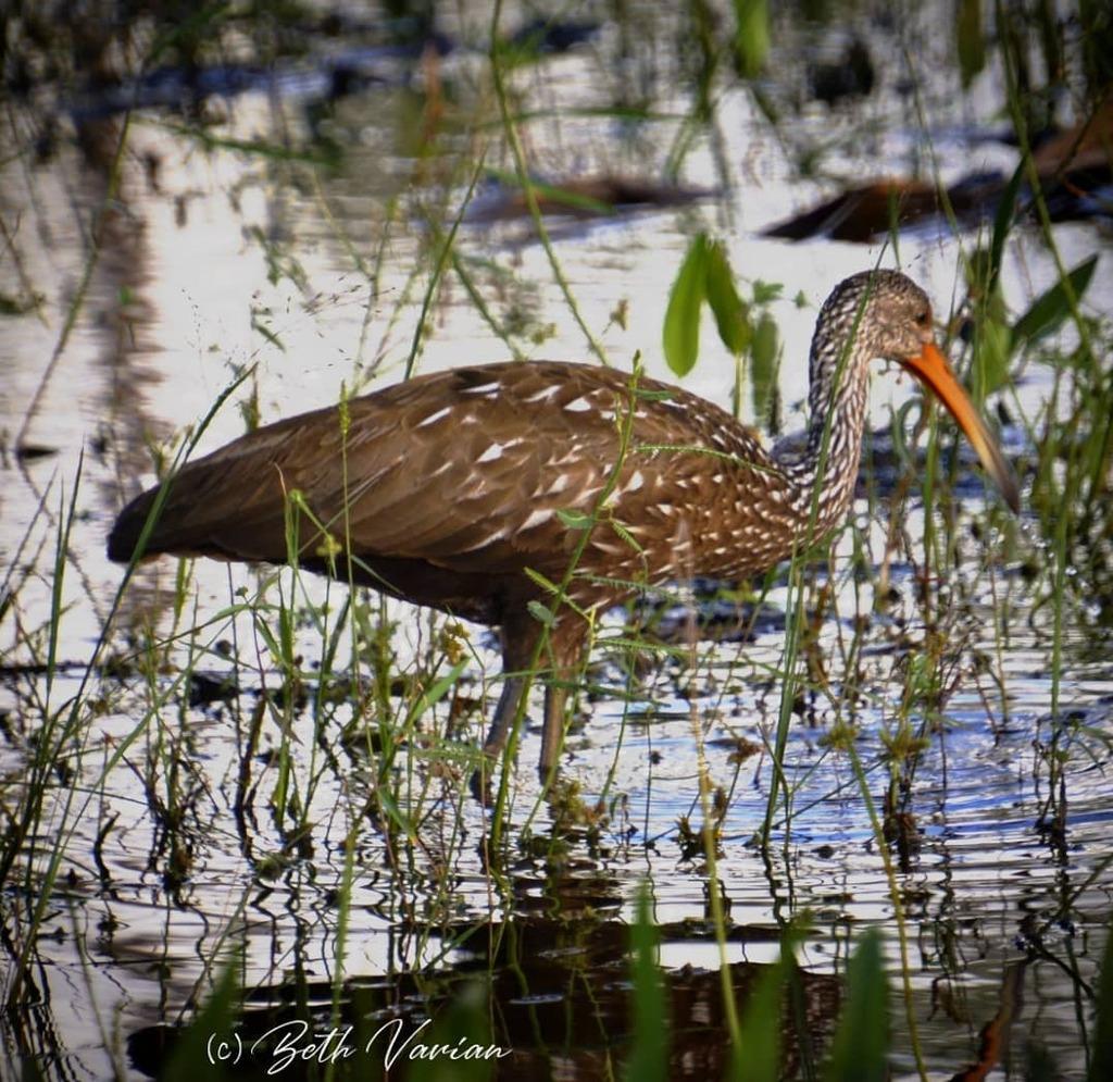 #floridalife #florida #outdoorphotography #naturephotography  #naturelife #wildlifephotography #wildlifephotos https://t.co/PtduEvOdKr