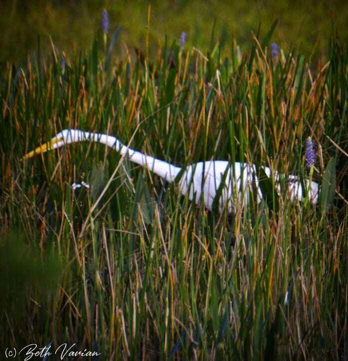 #floridalife #florida #outdoorphotography #naturephotography  #naturelife #wildlifephotography #wildlifephotos https://t.co/cq9iZAwpp2