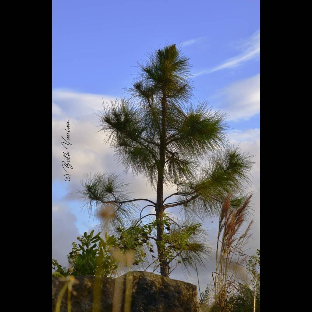 #floridalife #florida #outdoorphotography #naturephotography  #naturelife #wildlifephotography #wildlifephotos https://t.co/tjJaOHo6Q5