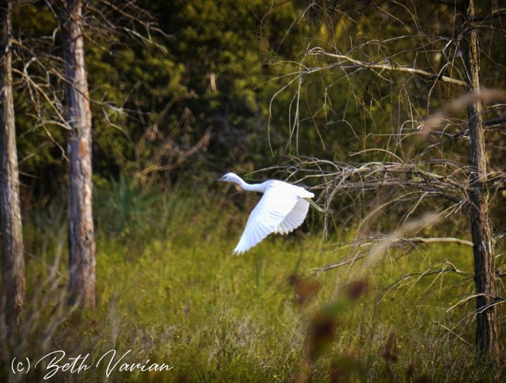 #floridalife #florida #outdoorphotography #naturephotography  #naturelife #wildlifephotography #wildlifephotos https://t.co/iZVLfMWEUo
