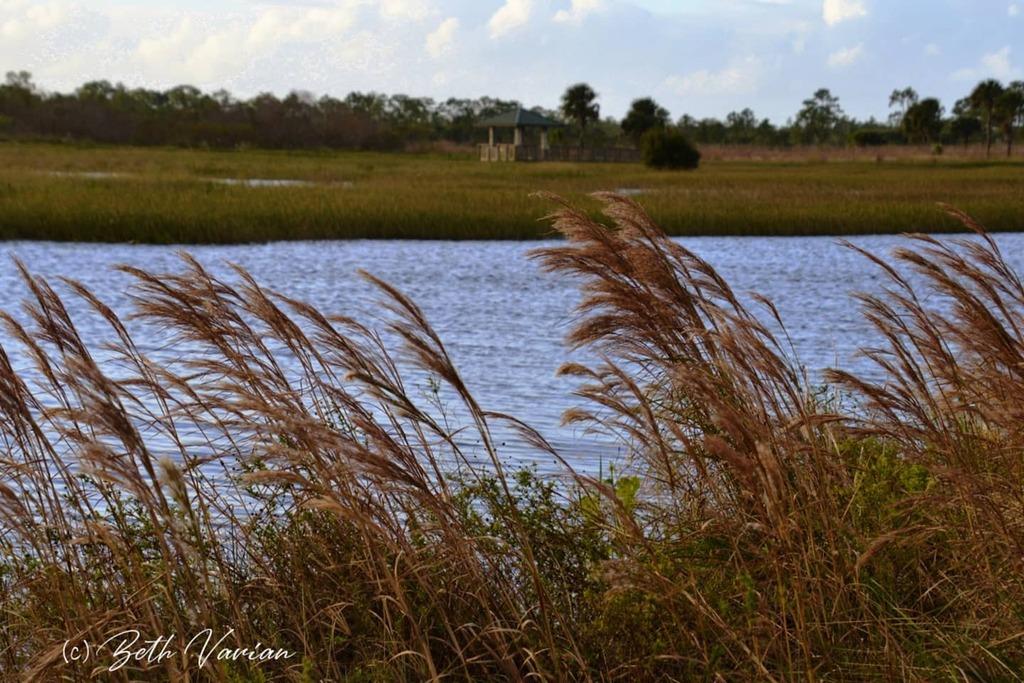 #floridalife #florida #outdoorphotography #naturephotography  #naturelife #wildlifephotography #wildlifephotos https://t.co/AbKZcwgcUA