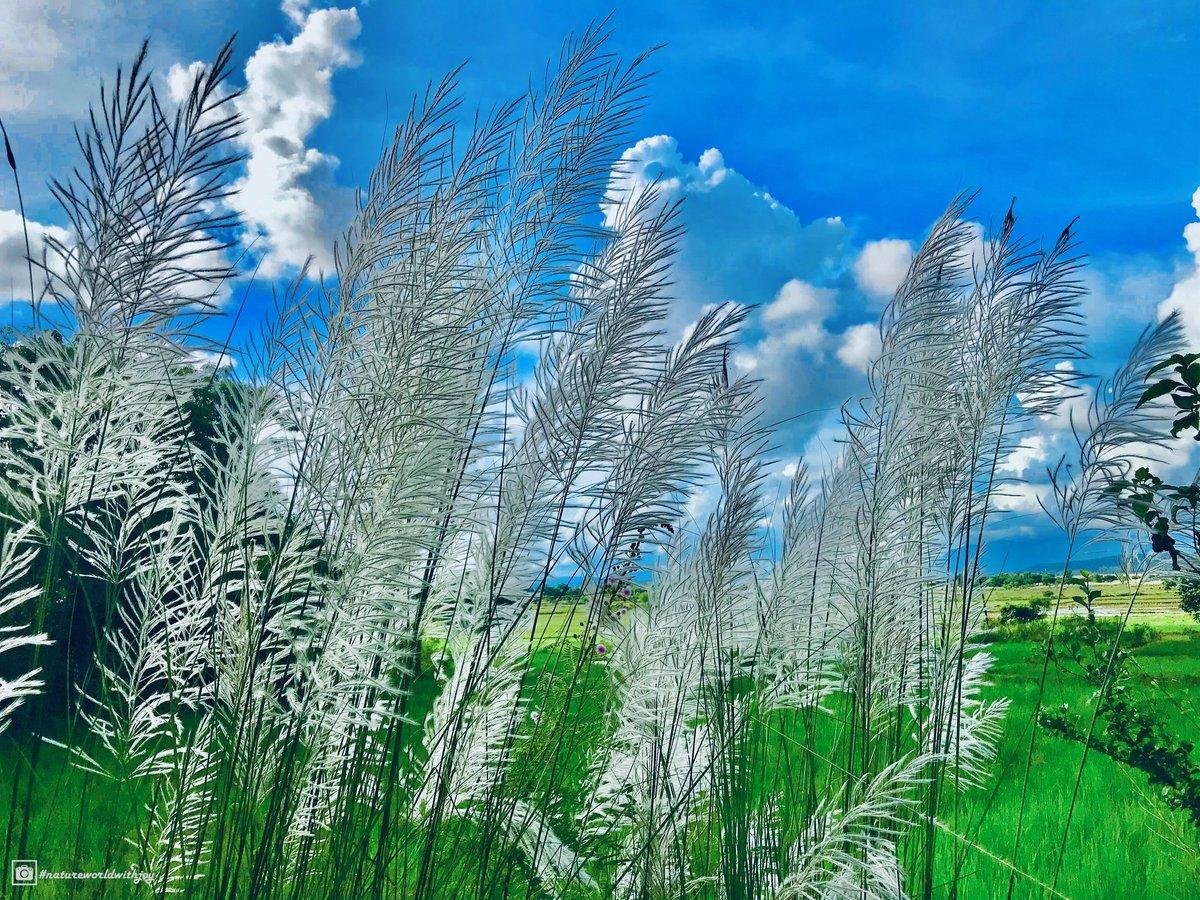 Another day, another sunrise💙 #natureworldwithjoy #storisofodisha #nature #photography #naturephotography #love #photooftheday #travel #instagood #beautiful #art #picoftheday #photo #instagram #like #landscape #naturelovers #follow #happy #bhfyp #life #ig #travelphotography https://t.co/1pBdW2K1JE