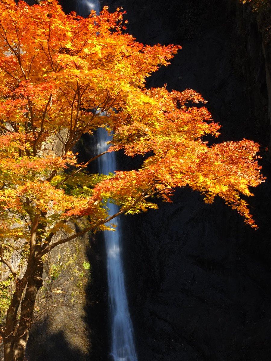 #写真 #写真好きな人と繋がりたい #Photography #Photograph #picture #photography #olympus #NaturePhotography https://t.co/KiCWAcxQkK