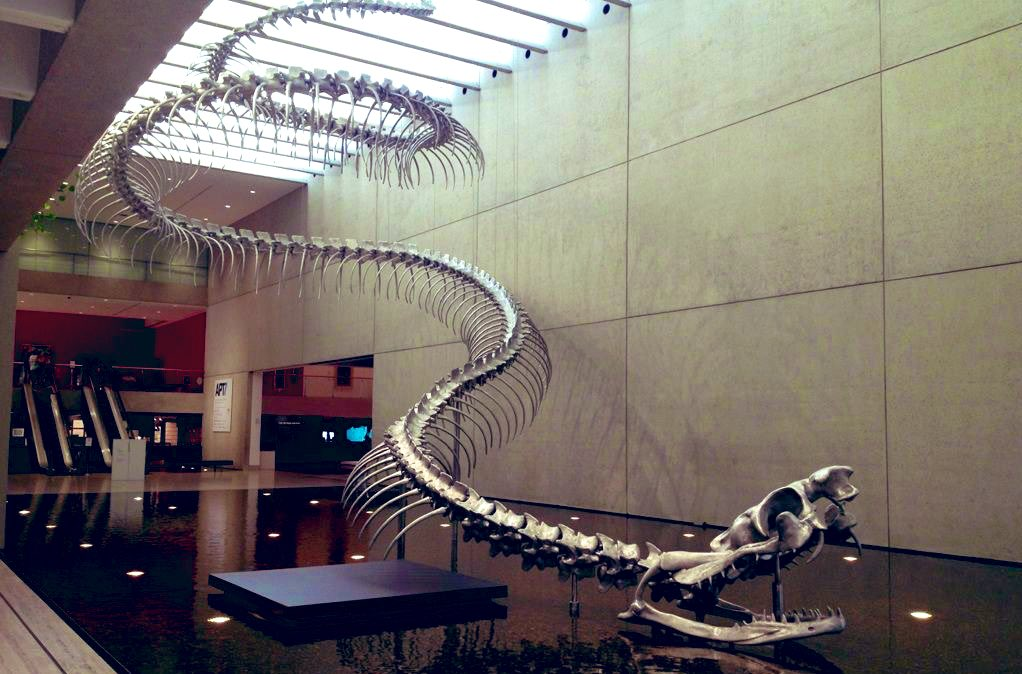 Titanoboa, the largest snake to ever live (14m long and around 1 ton). Sweet dreams!