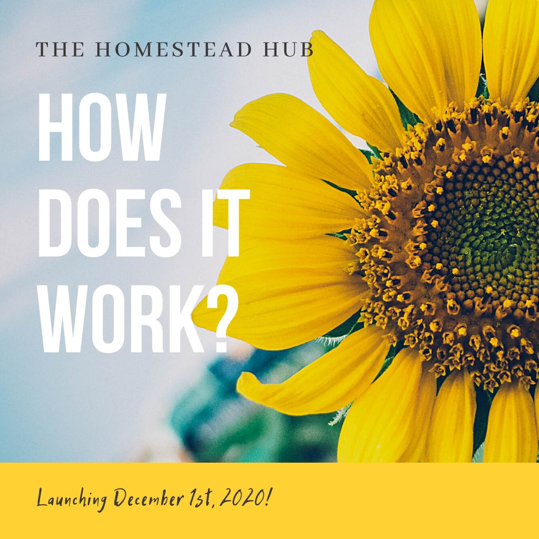 """Think """"𝙢𝙞𝙣𝙞 𝙜𝙤𝙤𝙜𝙡𝙚 𝙛𝙤𝙧 𝙧𝙚𝙜𝙞𝙤𝙣𝙖𝙡"""" Australia. 🧑💻 We are going live next week, and would LOVE you to spread the word.  🙏🌻 #thehomesteadhub #connectingregionalaustraila #minigoogleforregional  #communication #collaboration #productivity https://t.co/vS1WE2hLMC"""