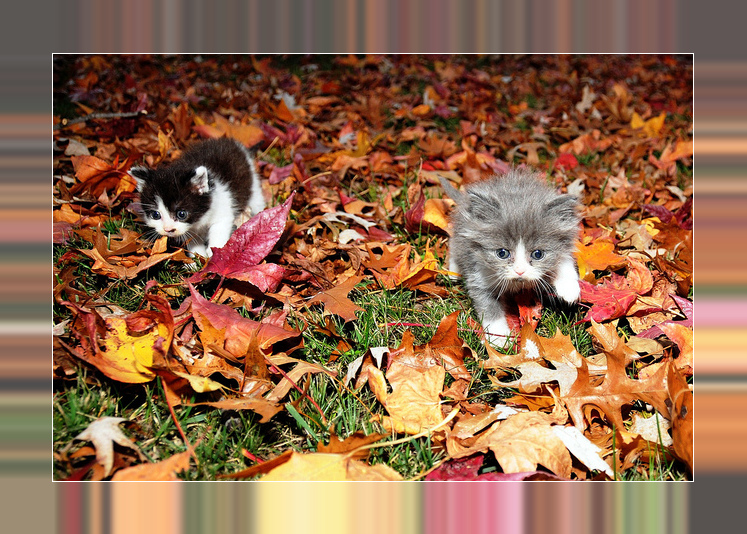 . #catsforcorpse  #AutumnIsAwesome
