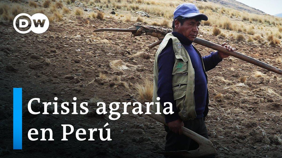 #Coronarivus diezma la agricultura peruana  La estricta cuarentena dificultó el transporte de cultivos y, sin demanda, se desplomaron los precios  La #Covid19 pone en riesgo la seguridad alimentaria en Perú con agricultores en quiebra y sin poder costearse la siguiente siembra/cc