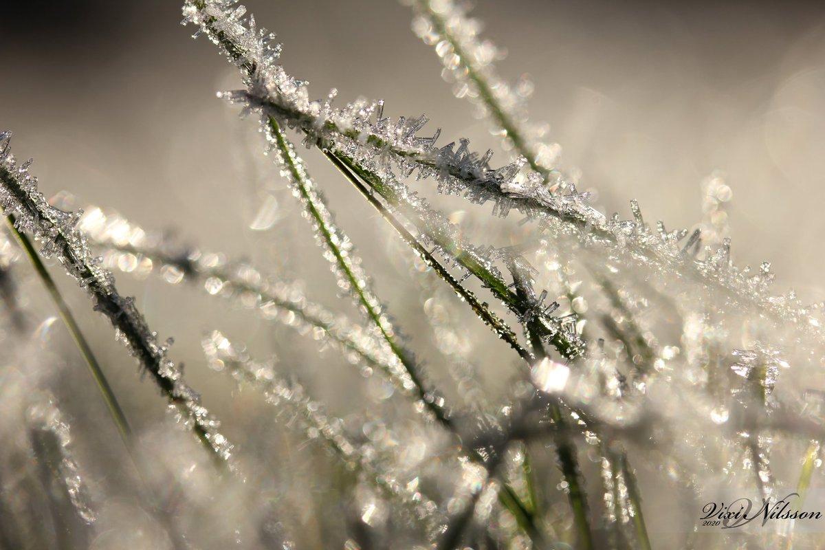 #frost #frostymorning #frostygrass #nature #naturephoto #naturephotography #photo #photography #vixinilsson https://t.co/s54sChArZK