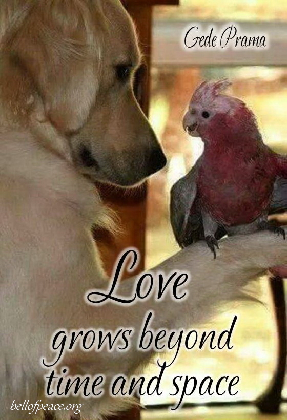 Love grows... #Peace #gedeprama #bali #beauty #happy #healthy #holy #innerharmony #JoyTrain  Photo courtesy: Pinterest https://t.co/t4j17G0Y75