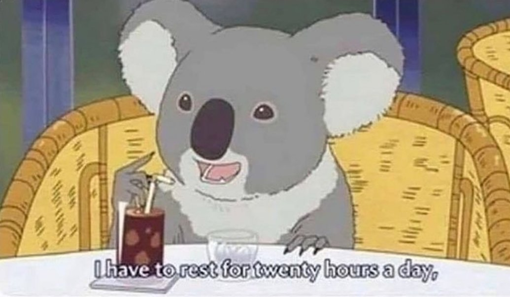 #lmao #true #laughs #koalas #meme #me #like #sleep https://t.co/vg26i9IhCH