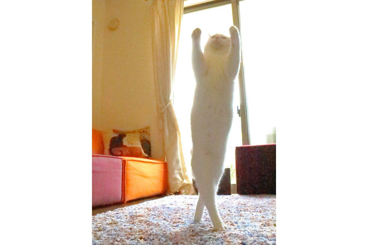バレエを踊る猫様のフィギュアを作ってみました。