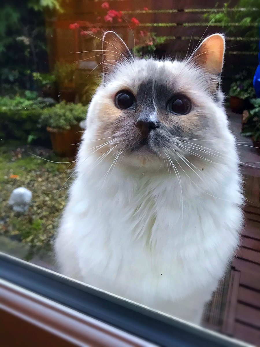 @Betty_Boo_Kat's photo on #Caturday