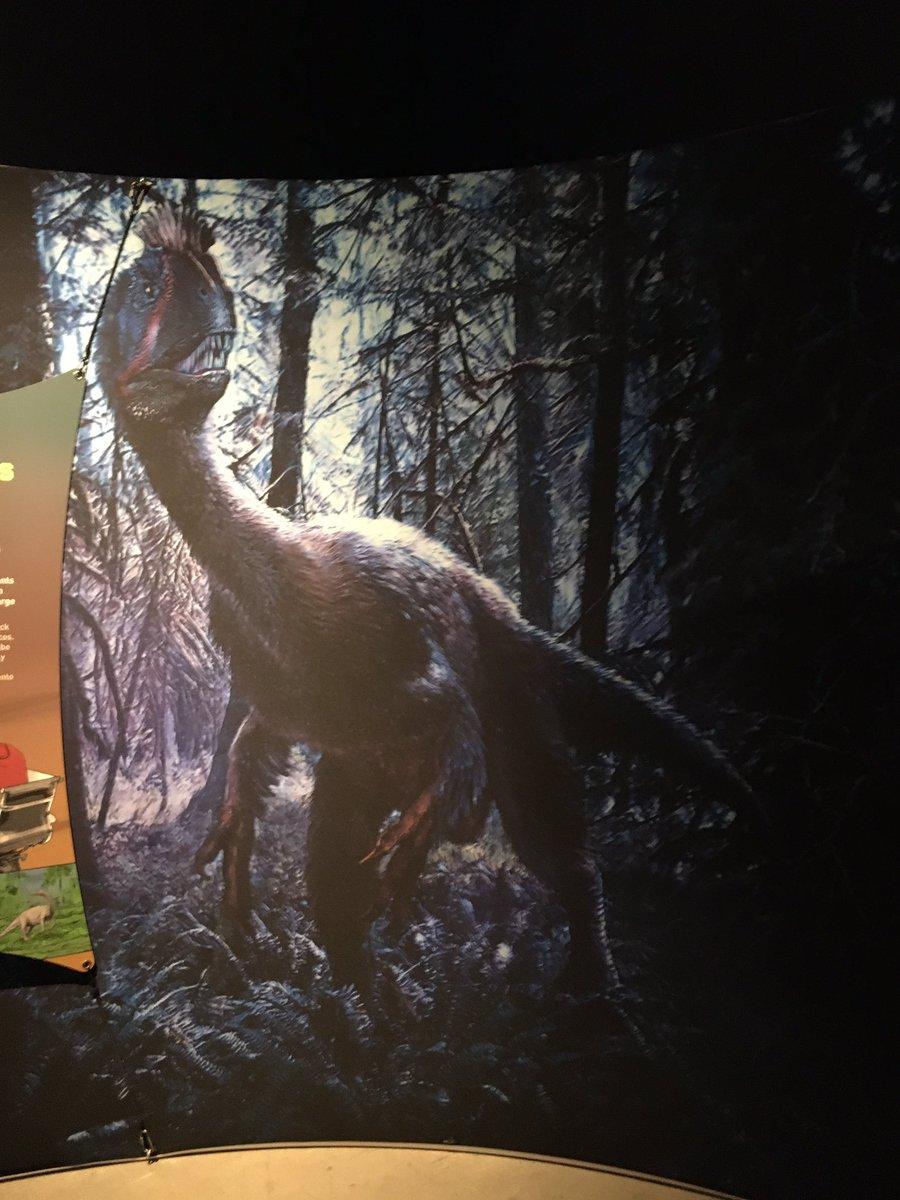 An image of Cryolophosaurus @nhmu   #AntarcticDinosaurs #Paleontology #Science #SciComm #Dinosaur #Dinosaurs #Fossil #Fossils #Geology #Biology #Zoology #NHMU #NaturalHistoryMuseumofUtah #Cryolophosaurus