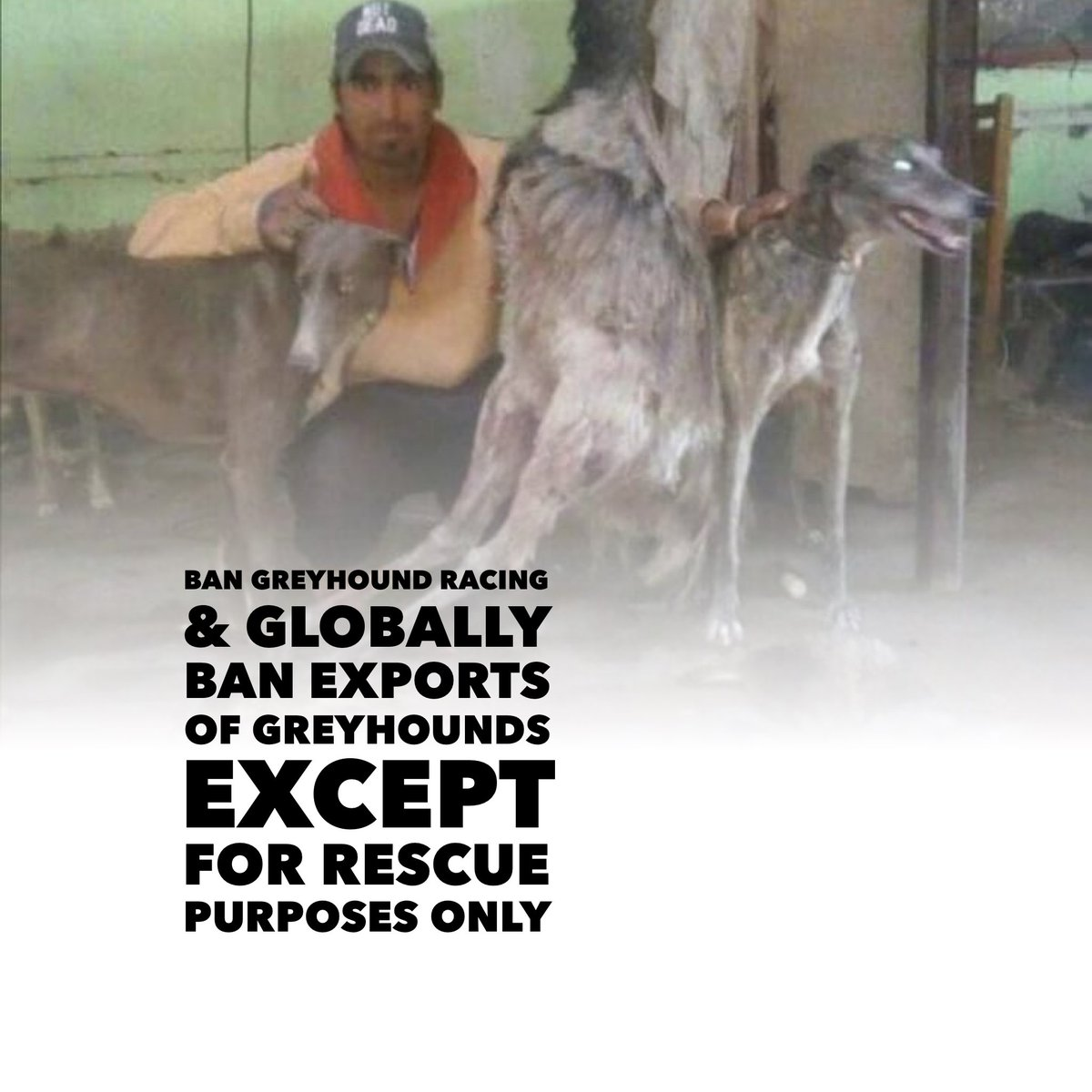 24 Online Protest https://t.co/hdyZRFqLNk  #BanGreyhoundRacing #Ireland #uk  #BAN #GREYHOUNDEXPORTS With the #EXCEPTION of #RESCUE #Purposes Only #StopExportationOfGreyhoundsToAsia  #StopGreyhoundExportsToPakistan @Independent @TheSun @MirrorBreaking_ https://t.co/PmUJbCz4OX