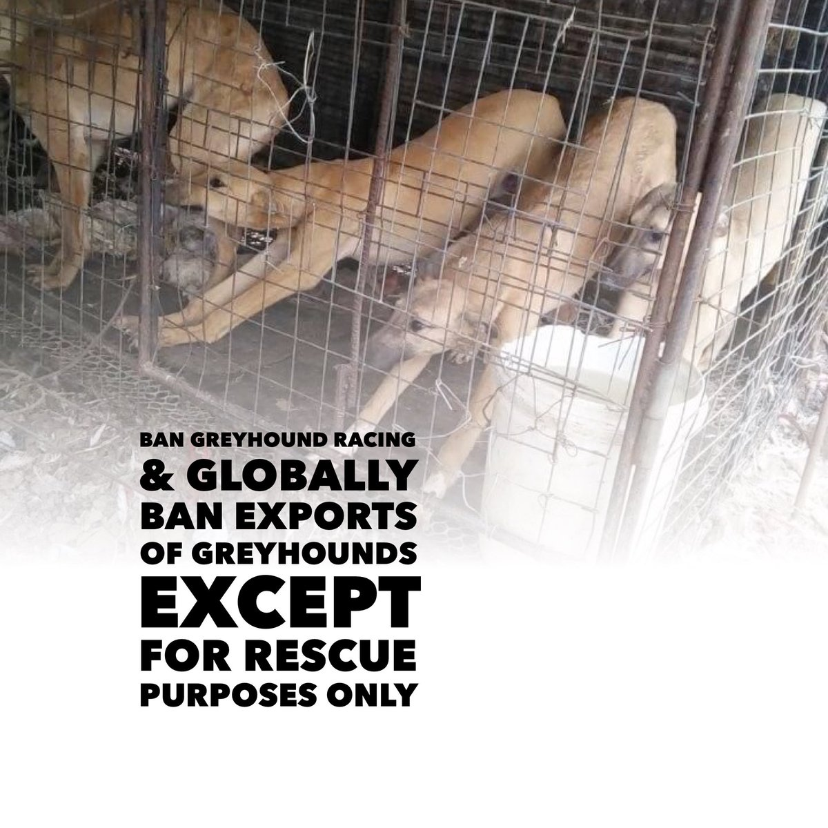 24 Online Protest https://t.co/hdyZRFqLNk  #BanGreyhoundRacing #Ireland #uk  #BAN #GREYHOUNDEXPORTS With the #EXCEPTION of #RESCUE #Purposes Only #StopExportationOfGreyhoundsToAsia  #StopGreyhoundExportsToPakistan @rickygervais @PeterEgan6 @0RonnieLee0 https://t.co/KMn5ociHap