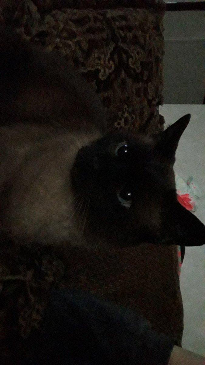 Bella cat :)) #catsforcorpse