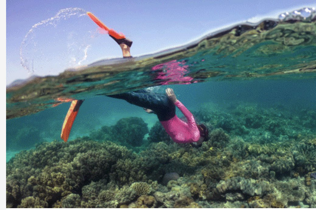Qantas photo today marketing the #GreatBarrierReef.   I wonder how many people perceive this as a healthy reef?
