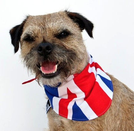 @musgraveandrew @andrew_youngy Congratulations to you both for your 6th and 16 th finish in #Finland #crosscountryskiing. #Heidi was cheering you both on in her #unionflag @TeamGB https://t.co/yqhQ3P5355