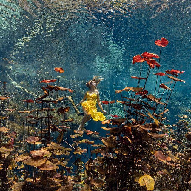 Underwater Lilies in Cenote #nature #naturelovers #naturephotography #natureperfection #photooftheday #photograpy #beautiful #world #naturelove #cute #sweet #NatureDaily #WorldNature #NaturePic https://t.co/SlXS9TGTFg