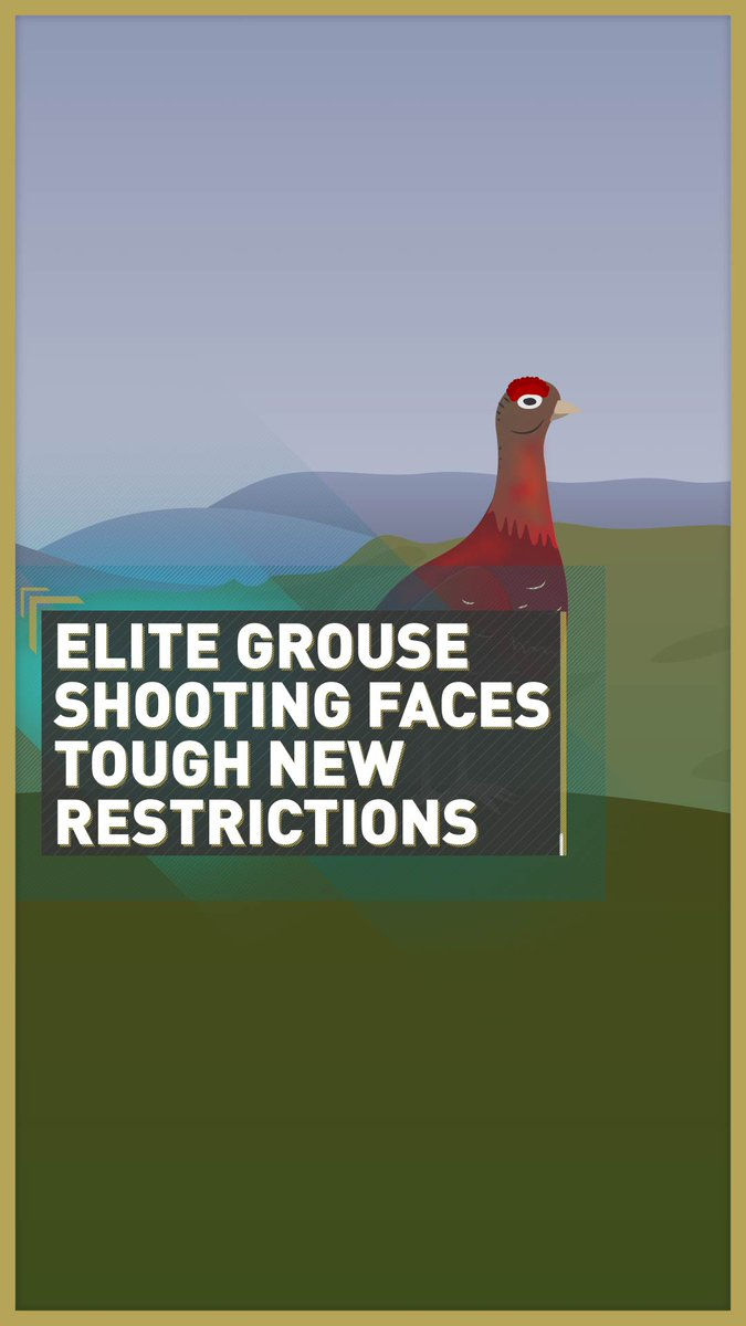 🦃 🏴󠁧󠁢󠁳󠁣󠁴󠁿 New proposed licenses for grouse shooting could protect raptors and lead to land reform, but gamekeepers and hunters are angry, saying the proposal threatens the industry's very existence.   Read more: