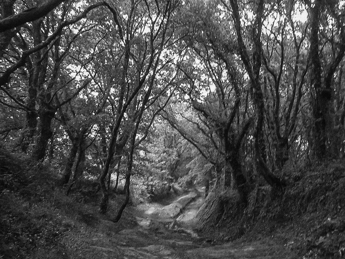 "#originalphotos #photography #nikonphotography #NaturePhotography #naturephoto #naturaleza #Galiza #monochrome #PalasdeRei  ""A veces los recuerdos eligen aparecerse por vías absurdas, que poco tienen que ver con lo que estábamos pensando."" Ida Vitale, Shakespeare Palace https://t.co/7kSuY9Ppdx"