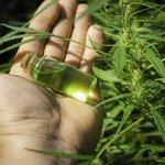 Image for the Tweet beginning: #cannabis #weed #marijuana Teenager had