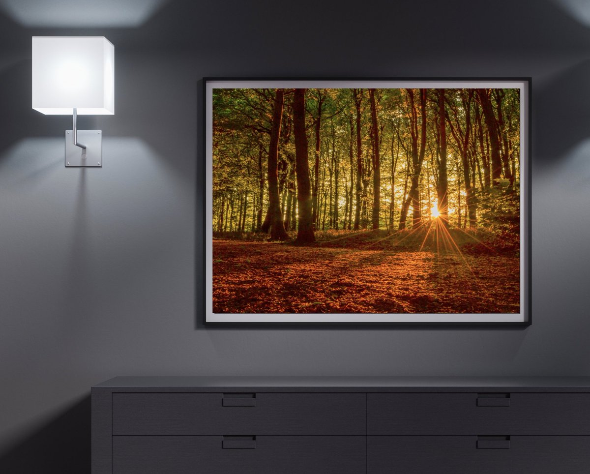 Forest Floor | Framed #landscape #print #framedphoto #framed #landscapephotography #photo #photography #forest #woods #trees #art #lightroom #photographer #kent #hortonkirby #farningham #lullingstone #sevenoaks https://t.co/1vAAKevt56