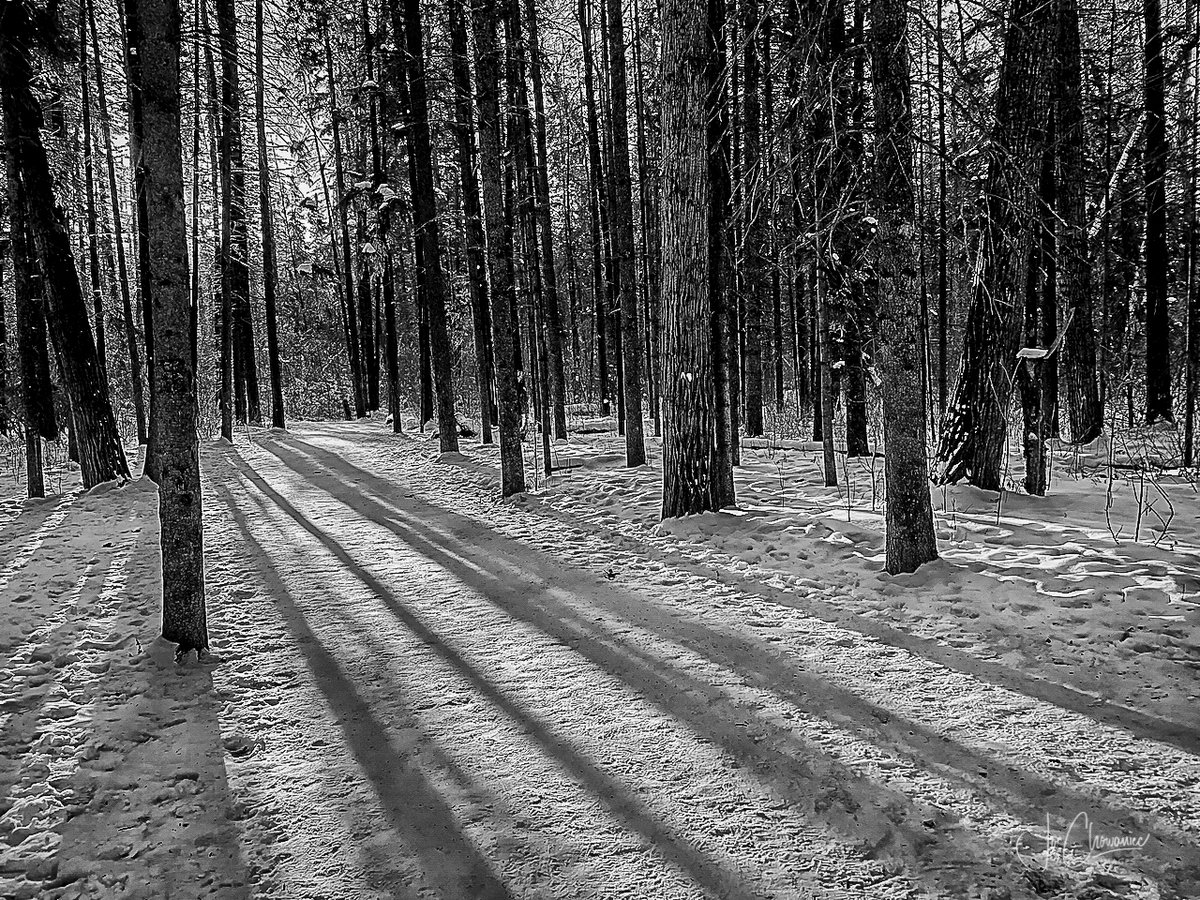 We are so lucky in #yeg with all of the trails we have in there river valley.  Get outside and enjoy nature this weekend! #yegwx #blackandwhite #landscape #trails #nature #explore @weathernetwork https://t.co/1bxhkVaZFQ