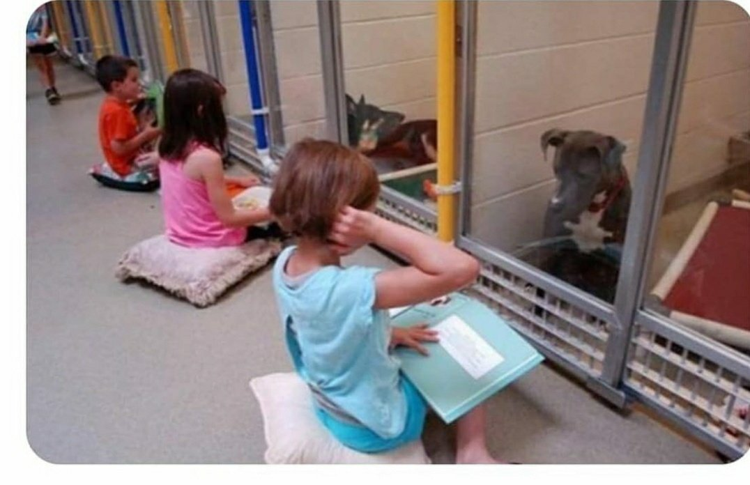 Children practicing reading to shelter dogs so they don't feel alone: