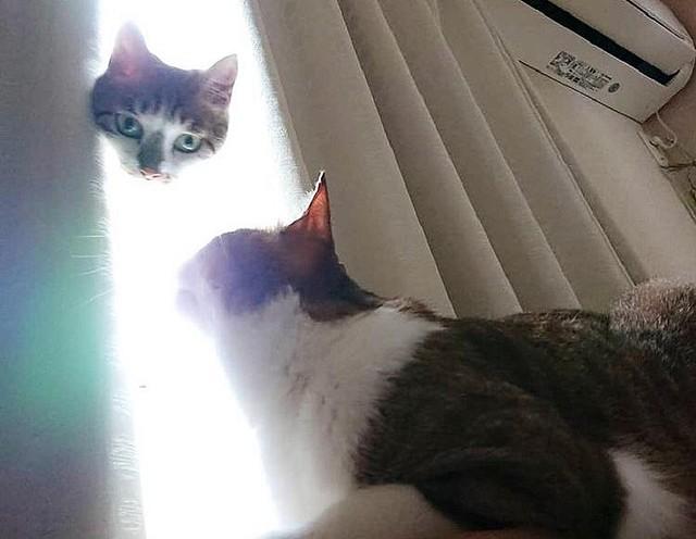 1000RT:【猫神様】猫の写真撮影に失敗、一匹が異世界から来た神のようにひょっこり顔を出した際に撮った写真だが、外の光が強く、カーテンから出た顔だけが浮き上がってしまったという。