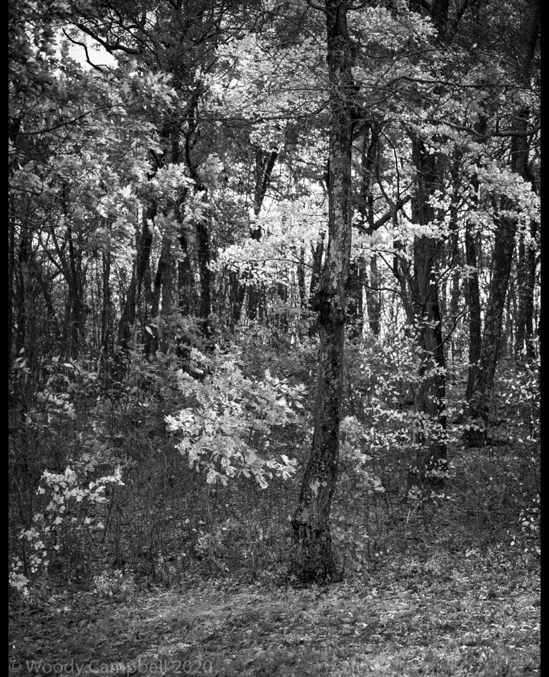 Now.     Day 4028 of one photograph every day for the rest of my life.  #BlackAndWhite #BNW #Photo #Monochrome #DailyPhoto #Leica #Monochrom #fallfoliage  #LiitchfieldCounty #CT
