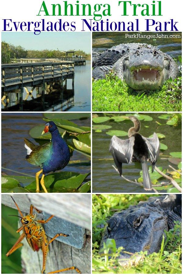 Anhinga Trail - Everglades National Park  #Travel #NationalPark