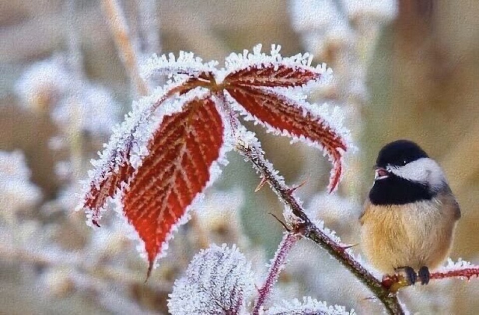 """❦Sometimes it is during a """"winter"""" in life that we pause long enough to grasp the simple beauty of what matters most. ~Anne Scottlin #matters #snow #grasp #winter #leaf  #priorities #pic #anon #ice #joyforlife https://t.co/Hqy0alIk98"""