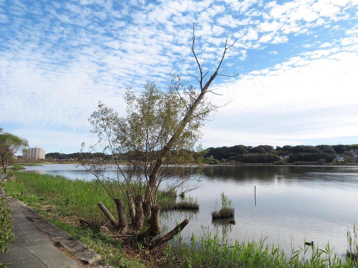 ☆ . 今日の佐鳴湖 . #佐鳴湖 #湖 #浜松市 #lake #sanaruko #空 #空が好き #雲 #雲が好き https://t.co/OgS64Px62F