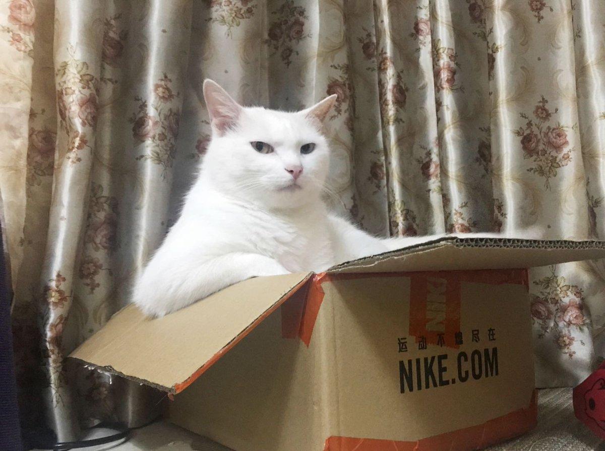 お久しぶりです。フォロワーさんちの、ダンボールでキメ顔の猫様を作ってみました。