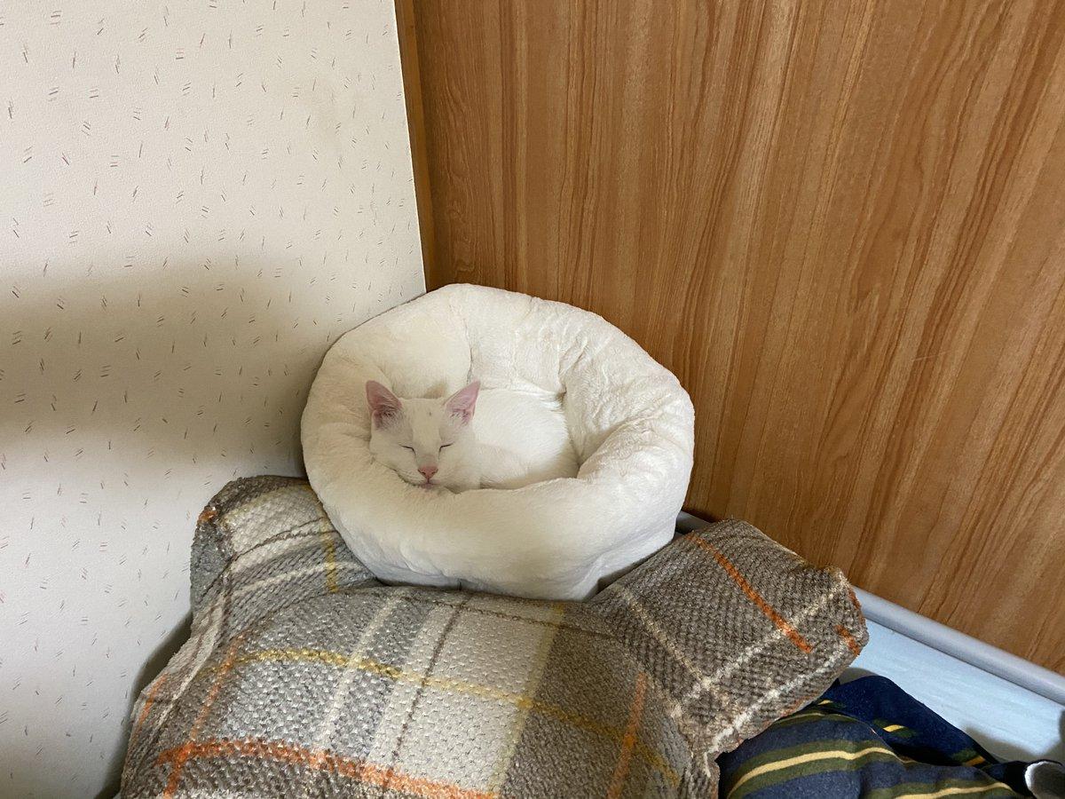 白貓消失的步驟 EnB7Go3UcAAQNuw