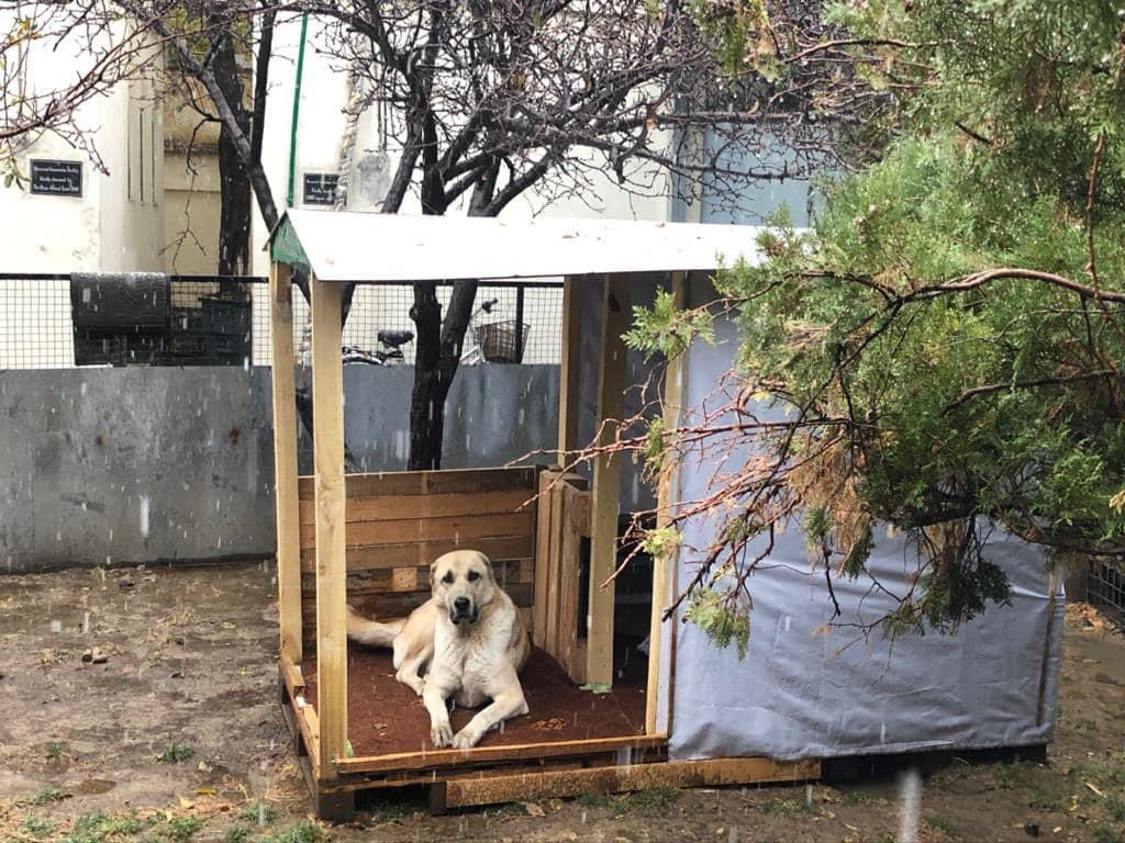 Who's in the house? Apollo is!   The cold weather has set in at the Nowzad clinic and Dr Reshad was worried that Apollo would get chilly ~ so he built this cosy house out of old pallets! How amazing does it look?   Well done Dr Reshad and enjoy your new home Apollo! 😍