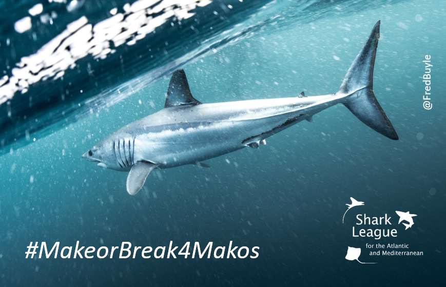 #Mako #sharks are having vital protections removed and their survival is threatened. #climatechange #climatechangeisreal #actonclimate #Actonclimatechange #climatecrisis #facetheclimatecrisis #facetheclimateemergency #endclimatesilence #MakeorBreak4Makos #SharkLeague #wildlife
