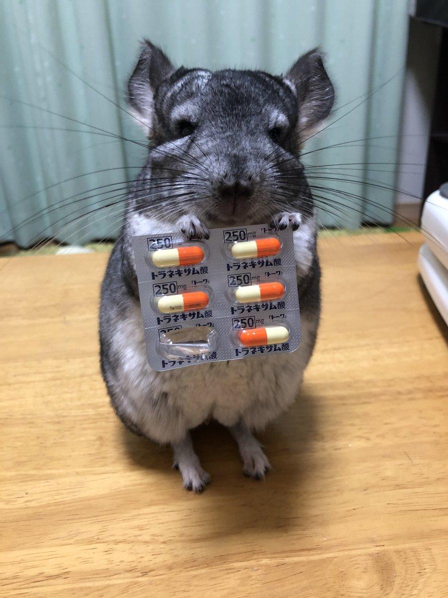Topics tagged under 鼠鼠 on 紀由屋分享坊 EnCD6FwVcAQw0x8