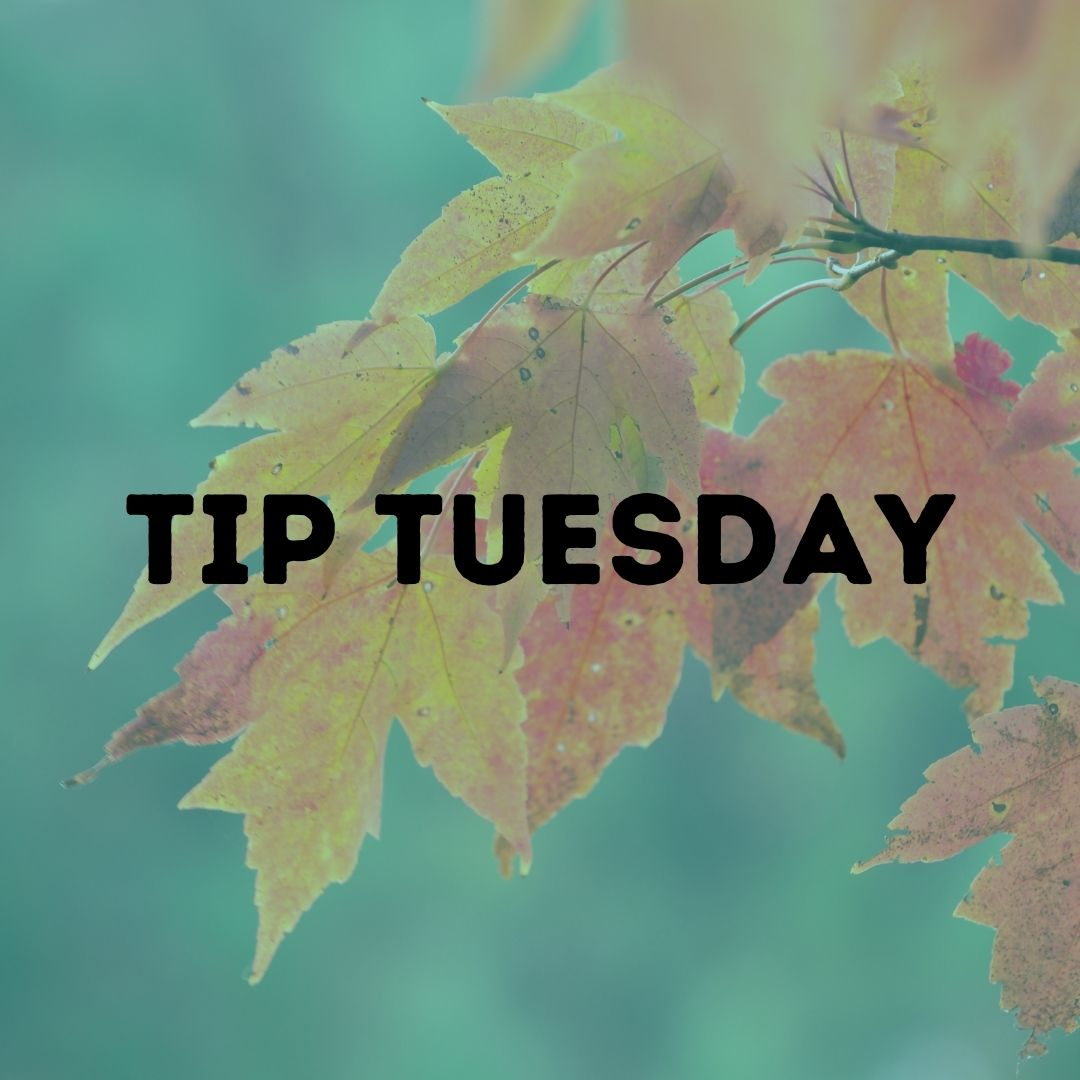 #Fall leaves may be beautiful, but they can cause serious flooding! Be sure to clean your floor drains constantly this month. #TipTuesday
