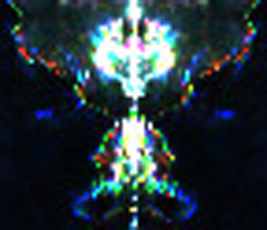 @neiltyson Interdimensional Beings found in nature.