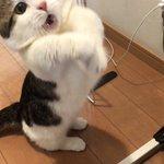 この表情の差よw猫のおもちゃを掴めた時と掴めなかった時の顔!