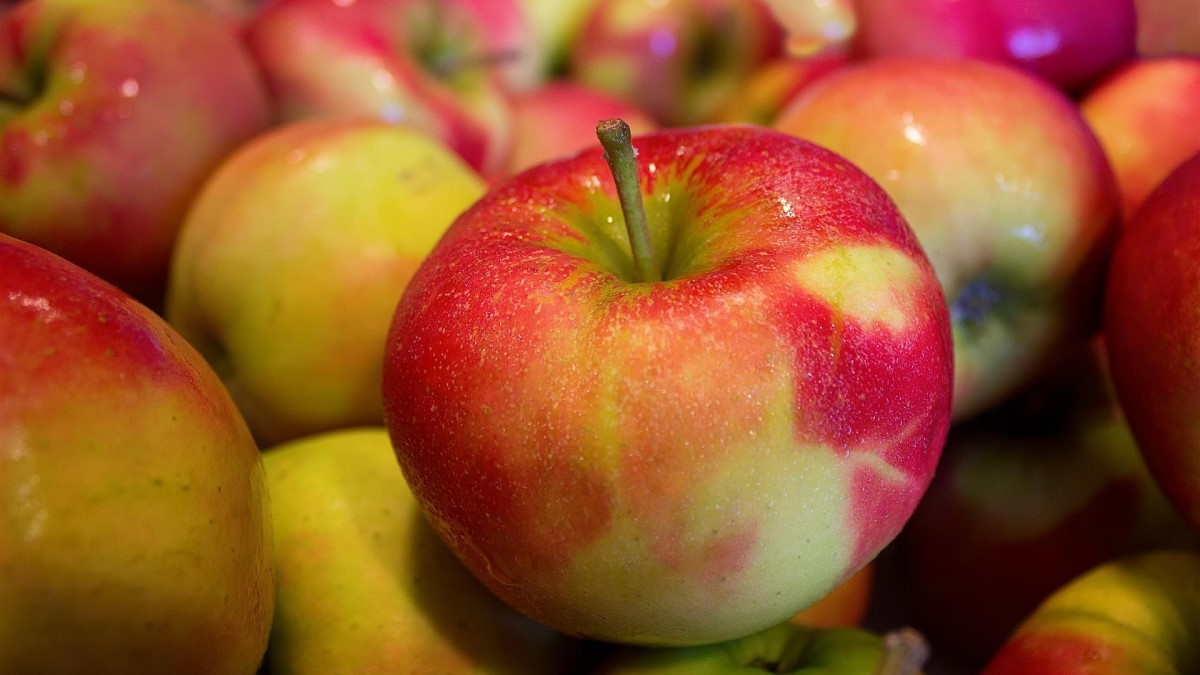 Thinking of #applepicking this #weekend? Apples are a good source of boron, a mineral that might play a role in some important body functions. Read more in our new fact sheet for health pros: https://t.co/rmabaY8zV4 https://t.co/F6B2S9TXYc