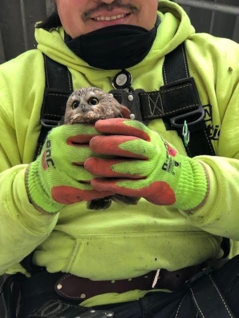 They found a small owl inside of this year's Rockefeller Christmas tree, he hitched a ride all the way to NYC and is now being treated and cared for at a wildlife rehab facility.