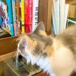 Image for the Tweet beginning: ちゃっかり宣伝できる良い猫である🐈 #左ききのエレン #言語化力